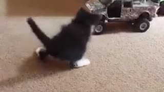Cat pulls toy truck - Video