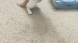 Hilarious cat nails the landing!  - Video