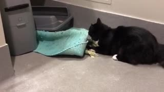 Cat Disproves Of Bathroom Rug, Humorously Removes It