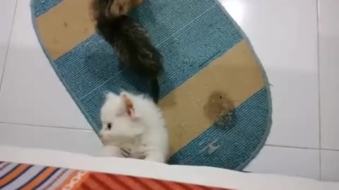 Three Small Kittens Playing