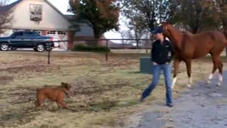 Dog Stealing The Horse - Video