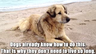 What Our Dogs Would Want Us To Know