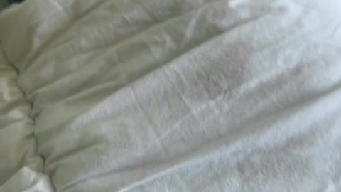 Dog doesn't want to get out of bed