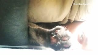 Slowmotion cat claws at video under owner's face - Video