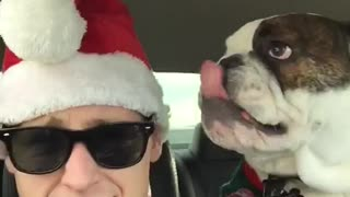 Dog thinks owner's Santa hat is chew toy - Video