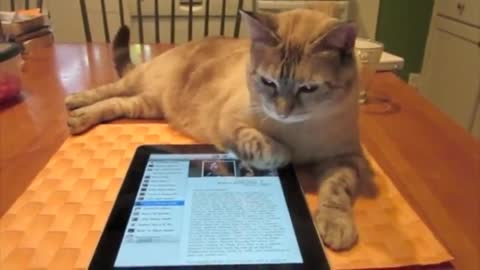 Kitty Plays iPad Music