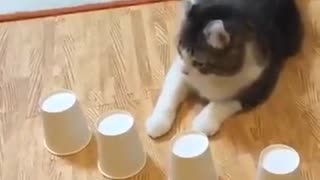 Cats are smarter than any of us - Video