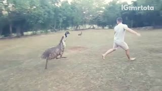 A man in grey chased by giant bird - Video