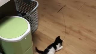 A cat plays with a kitten - Video