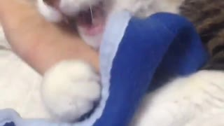 stroking the kitten - Video