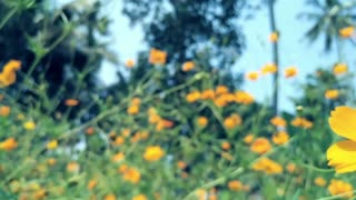 Bees Drinking Nectar From Flowers  - Video