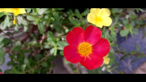 Flowers Videos With Music For Video Editing - Beautiful Flowers - No Copyright - FreeCinematics