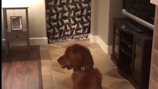 Dog Owner Returns Home From Deployment What The Fluff