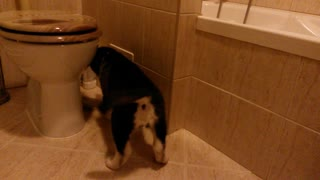 Puppy freaks out over air freshener bottle  - Video