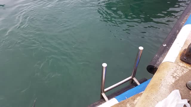 Tuna Makes Seagull Her Next Meal  - Video