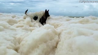 Doggo Loses Ball in Sea Foam
