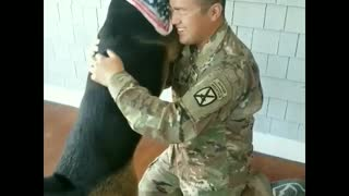 Soldier Reunited With Dog After Spending Nine Months Apart - Video