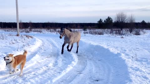 Friendly Horse Plays With Her Canine Best Friend In The Snow