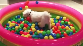Dog jumps into ball pit in epic slow motion - Video
