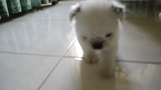 Pipi is so cute :) - Video