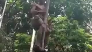 Elderly man teaches you how to climb a tree - Video