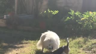 Adorable puppies are having fun wrestling eachother