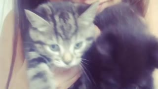 Two Cute Kittens With Thier Owner