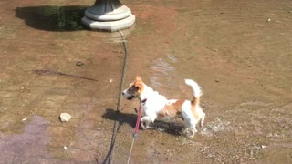 Dog in the fountain