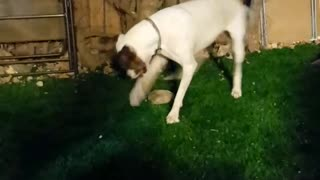 sign this dog to FC Barcelona  - Video