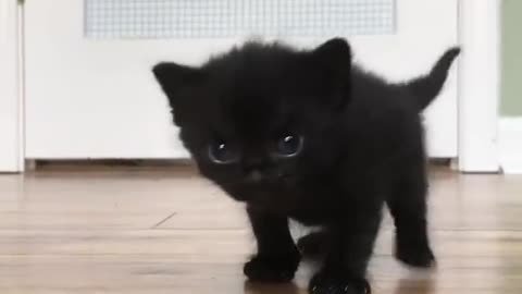 Black Kitten surprised to see the camera so cute