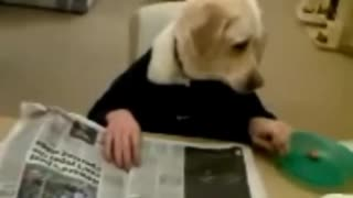 Dog flipping through newspaper  - Video