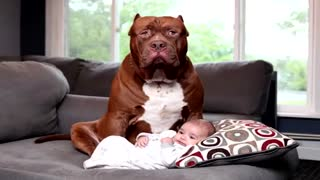 You won't believe how this dog defends a baby its mom beats. Dogs that protect and defend children