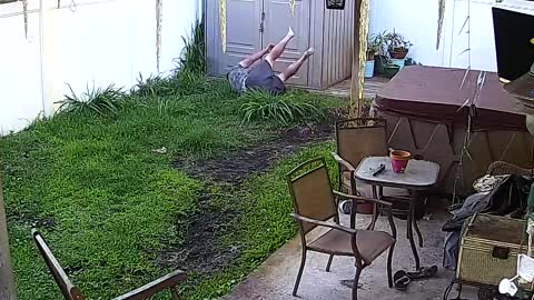 Animals Caught On Security Cameras