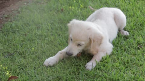 A puppy looking for a home 4