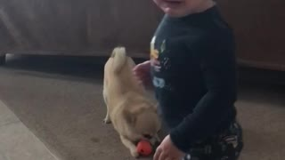 Baby vs puppy  - Video