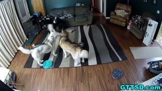 Hidden camera captures hilarious dog behavior