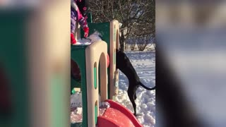 Excited Puppy Loves Playing In The Snow