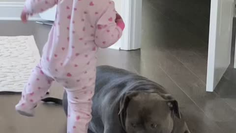 Baby gets startled by her pitbull