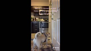 funny videos of animals, elephants and other animals