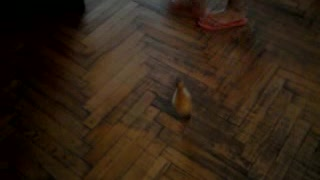Hilarious Duckling wants some attention