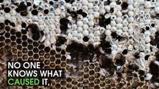 What Is Happening To Bees - Video