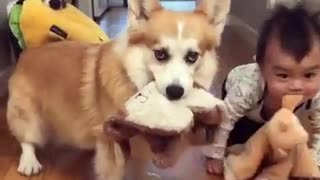 Cute baby with two dogs