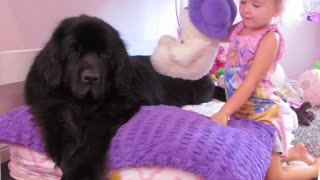 Giant dog comforts sick toddler - Video