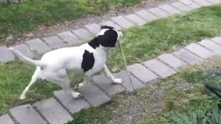 Dog pole