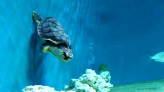 Turtles Have More Fun! - Video