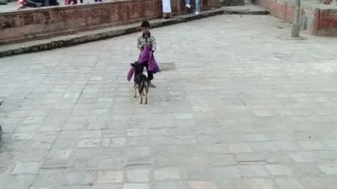 The street boy plays with the dog and it is refusing to give up its stuff