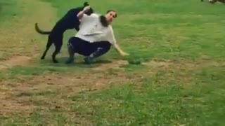 Collab copyright protection - black dog run park woman fall - Video