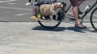 Dog on Venice Beach thinks he's pedaling bicycle