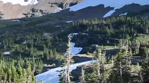 Grizzly Bear Hunting Mountain Goats in Glacier National Park
