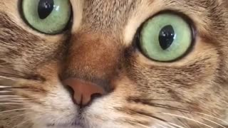 Crazy rare cat with green eye color